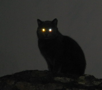 Chat noir Superstition